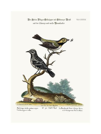 The Black-Throated Green Flycatcher, and the Black and White Creeper, 1749-73-George Edwards-Giclee Print