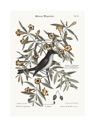 The Blackcap Flycatcher, 1749-73-Mark Catesby-Giclee Print
