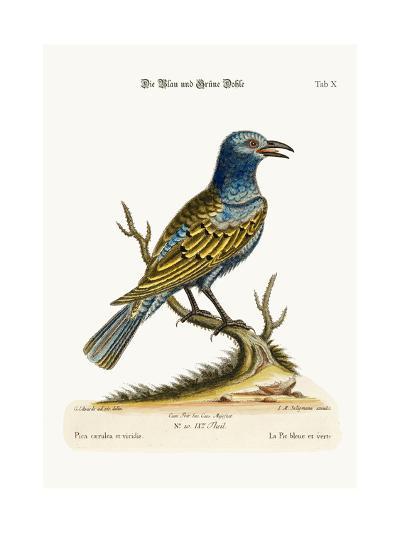 The Blue and Green Daw, 1749-73-George Edwards-Giclee Print