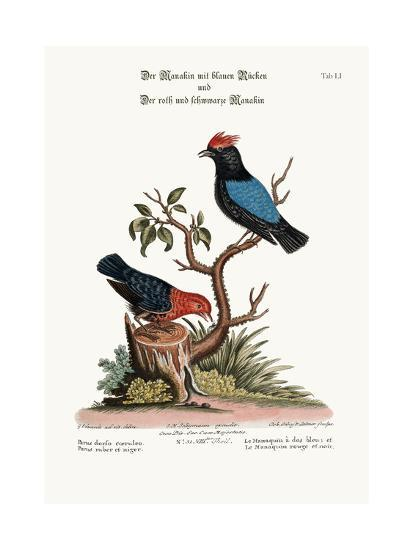 The Blue-Backed Manakin, and the Red and Black Manakin, 1749-73-George Edwards-Giclee Print
