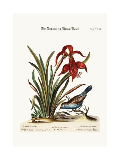 The Blue-Bellied Finch. the Narcissus Jacobea, 1749-73-George Edwards-Giclee Print