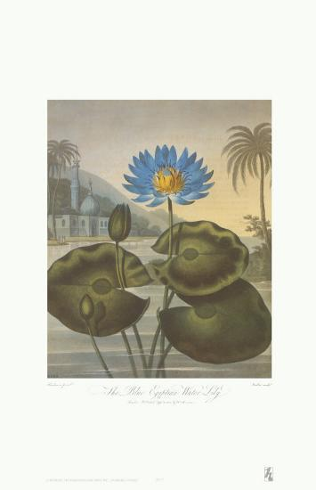 The Blue Egyptian Water-Lily-Dr^ Robert J^ Thornton-Art Print