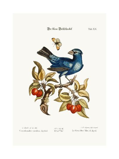 The Blue Gros-Beak from Angola, 1749-73-George Edwards-Giclee Print