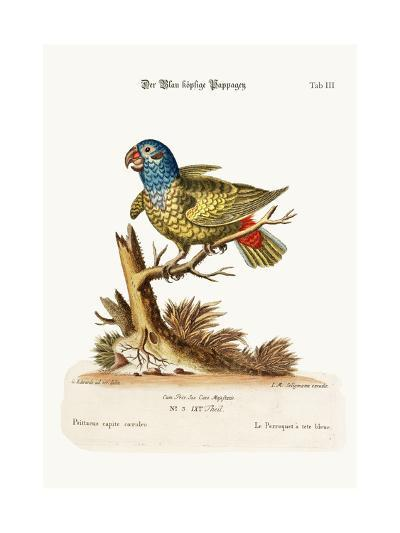 The Blue-Headed Parrot, 1749-73-George Edwards-Giclee Print