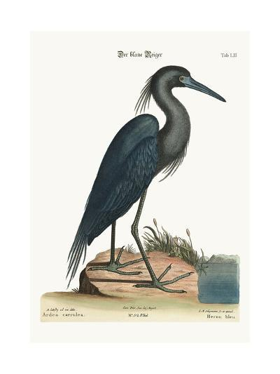 The Blue Heron, 1749-73-Mark Catesby-Giclee Print