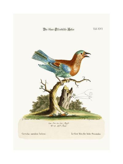 The Blue Jay from the East-Indies, 1749-73-George Edwards-Giclee Print