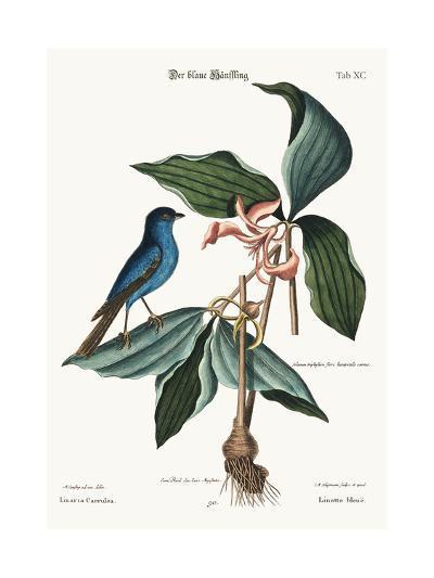 The Blue Linnet, 1749-73-Mark Catesby-Giclee Print