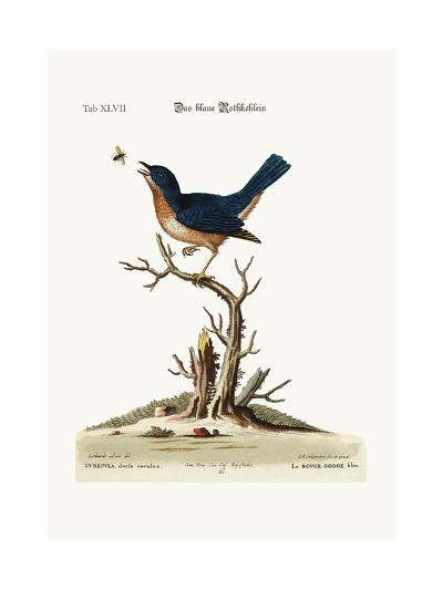 The Blue Red-Breast, 1749-73-George Edwards-Giclee Print