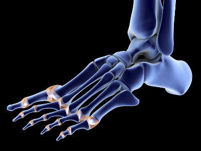 The Bones of the Foot-PASIEKA-Photographic Print