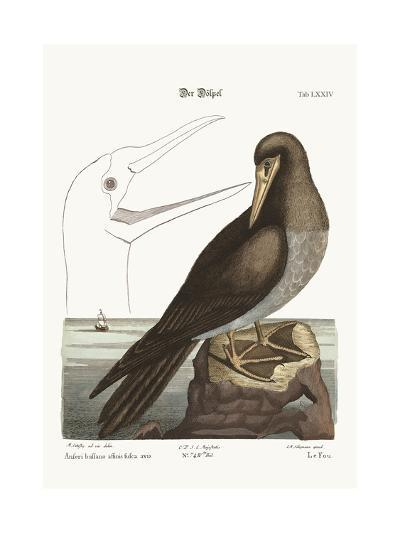 The Booby, 1749-73-Mark Catesby-Giclee Print