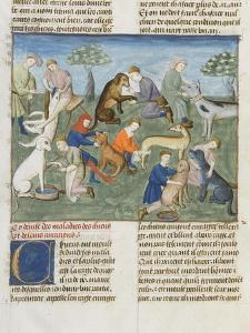 The Book of Gaston Phoebus Hunting in Care for Dogs
