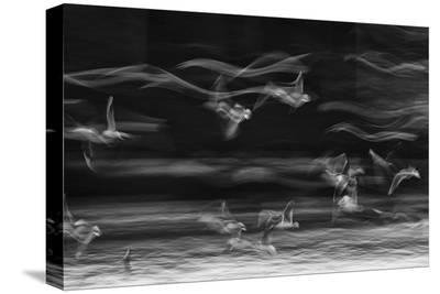 The Boundary Between Reality And Fantasy-Ebrahim Bakhtari Bonab-Stretched Canvas Print