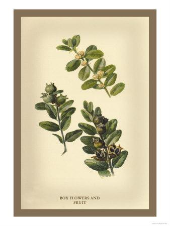https://imgc.artprintimages.com/img/print/the-box-flowers-and-fruits_u-l-p27vng0.jpg?p=0
