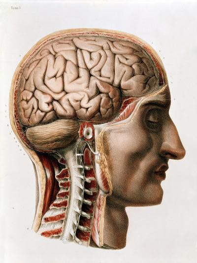 """Anatomie De L Homme the brain, plate from """"traite complet de l'anatomie de l'homme"""" 1866"""