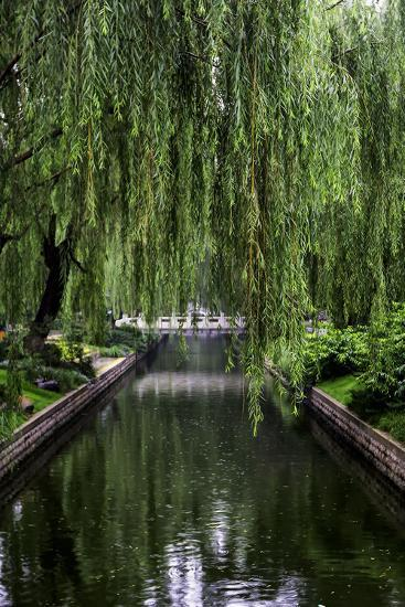 The Branches of a Weeping Willow Tree, Salix Babylonica, Hanging over a Calm Waterway-Jonathan Irish-Photographic Print