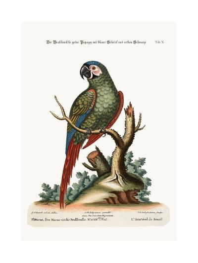 The Brasilian Green Maccaw, 1749-73-George Edwards-Giclee Print