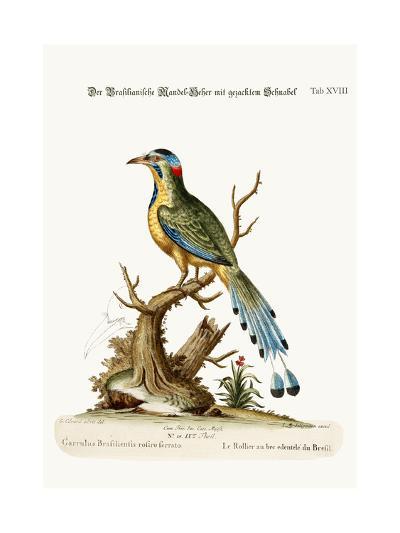 The Brasilian Saw-Billed Roller, 1749-73-George Edwards-Giclee Print