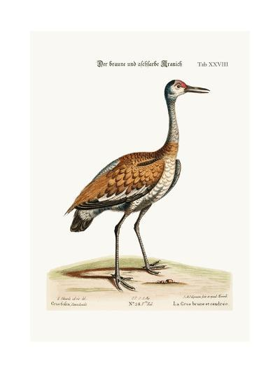 The Brown and Ash-Coloured Crane, 1749-73-George Edwards-Giclee Print