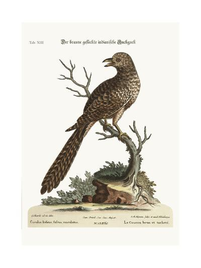 The Brown and Spotted Indian Cuckow, 1749-73-George Edwards-Giclee Print