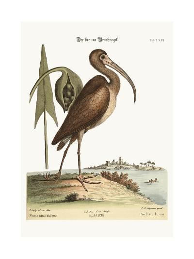 The Brown Curlew, 1749-73-Mark Catesby-Giclee Print