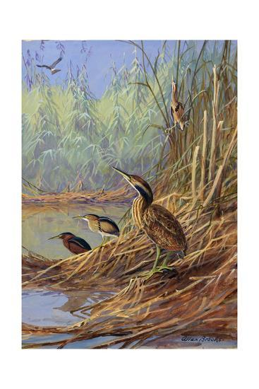 The Brown Feathers of Bitterns Blend with the Variegated Surrounding-Allan Brooks-Giclee Print