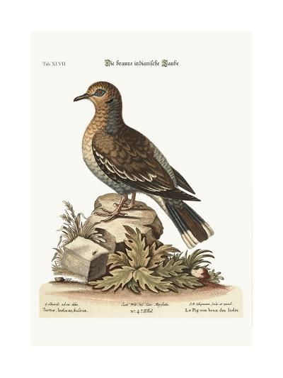 The Brown Indian Dove, 1749-73-George Edwards-Giclee Print