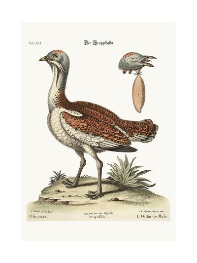 The Bustard Cock, 1749-73-George Edwards-Giclee Print
