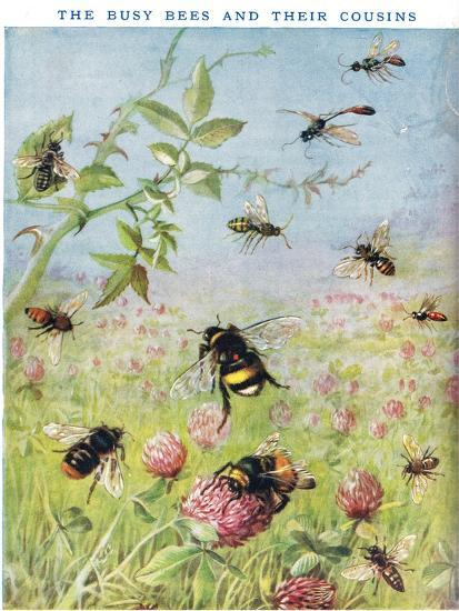 The Busy Bees and their Cousins-Maud Scrivener-Giclee Print