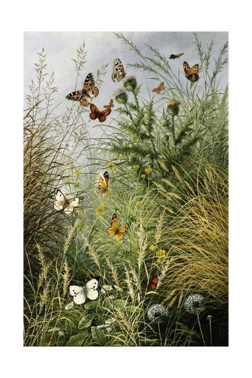 The Butterflies' Haunt (Dandelion Clocks and Thistles)-William Scott Myles-Giclee Print