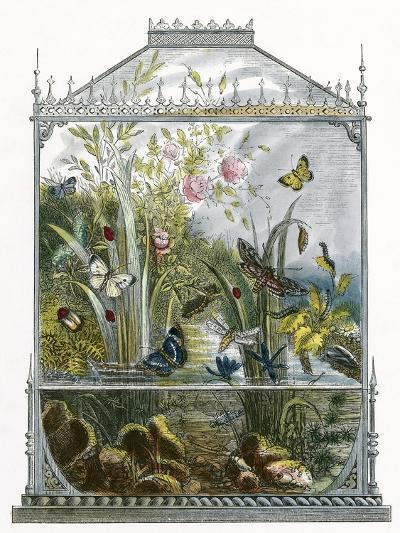 The Butterfly Vivarium-English-Giclee Print
