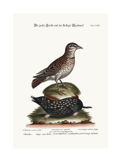 The Calandra, and the Spotted Mole, 1749-73-George Edwards-Giclee Print