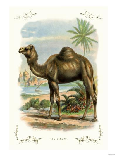 The Camel--Art Print