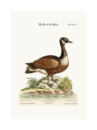 The Canada Goose, 1749-73-George Edwards-Giclee Print