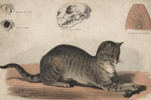 The Cat, 1872