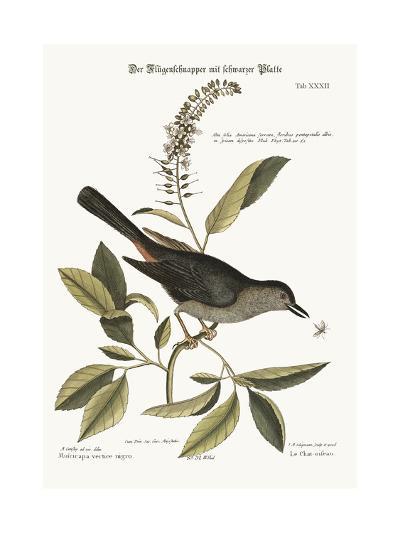 The Cat-Bird, 1749-73-Mark Catesby-Giclee Print