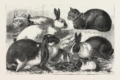The Cat, Rabbit, and Guinea-Pig Show at the Alexandra Palace, 1876, Uk--Giclee Print