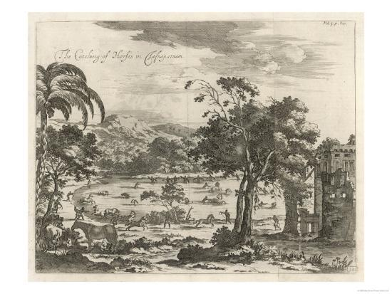 The Catching of Horses in Jafnapatnam on the Island of Ceylon--Giclee Print
