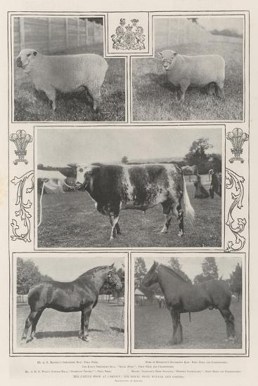 The Cattle Show at Cardiff, the Royal Prize Winner and Others--Giclee Print