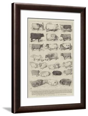 The Cattle Show at Islington, Some of the Prize-Winners-Alfred Chantrey Corbould-Framed Giclee Print
