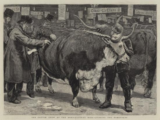 The Cattle Show at the Agricultural Hall, Judging the Herefords-William Small-Giclee Print