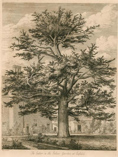 The Cedar in the Palace Garden at Enfield, Middlesex-Jacob George Strutt-Giclee Print