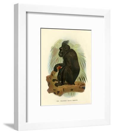 'The Celebean Black Baboon', 1896-Henry Ogg Forbes-Framed Giclee Print