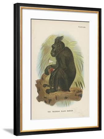 The Celebean Black Baboon--Framed Giclee Print