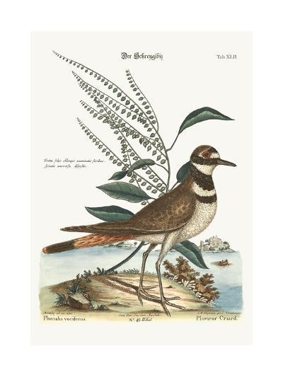 The Chattering Plover, 1749-73-Mark Catesby-Giclee Print