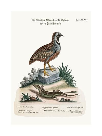 The Chinese Quail and the Guernsey Lizard, 1749-73-George Edwards-Giclee Print