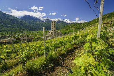 The Church of Bianzone Seen from the Green Vineyards of Valtellina, Lombardy, Italy, Europe-Roberto Moiola-Photographic Print