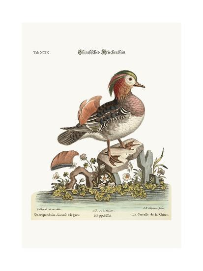 The Cinese Teal, 1749-73-George Edwards-Giclee Print