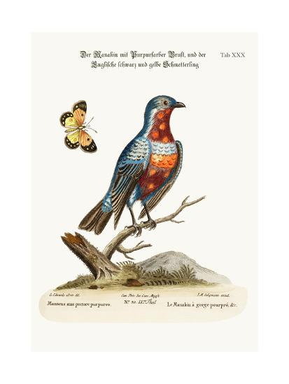 The Cock Purple-Breasted Manakin, 1749-73-George Edwards-Giclee Print