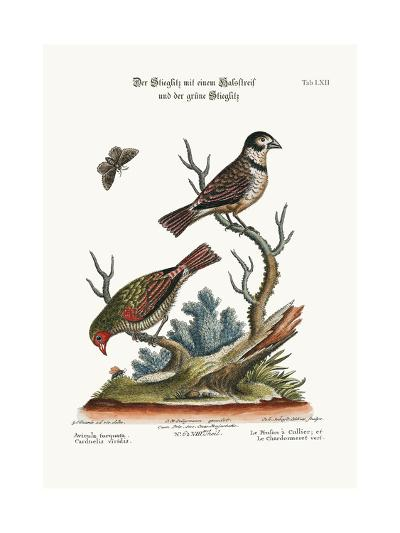 The Collared Finch, and the Green Goldfinch, 1749-73-George Edwards-Giclee Print
