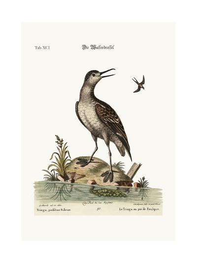 The Coot-Footed Tringa, 1749-73-George Edwards-Giclee Print